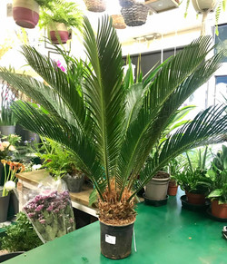 We've welcomed some more beautiful plants to our shop