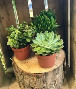 Lovely Selection of Houseplants