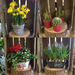 We have a lovely selection of plants