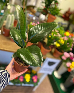 Smaller plants and flowers available