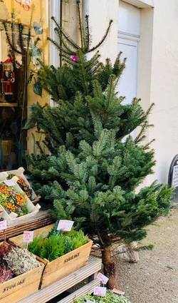 Fir Non Drop Christmas Trees