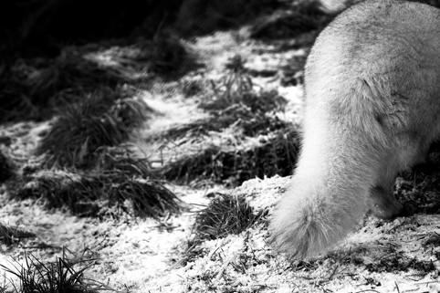 Cat_032_Highland_wildlife1483-1.jpg