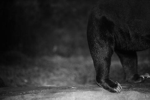 bear7199.jpg