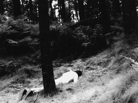 deadwood2.jpg