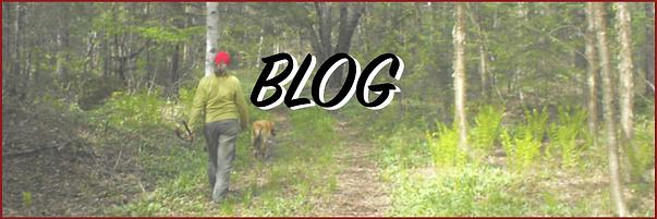 Blog_v2.png
