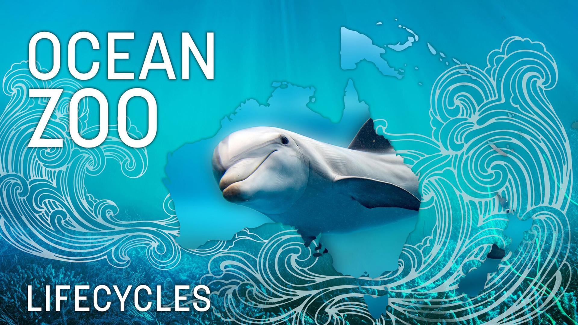 Ocean-Zoo-Lifecycles.jpg