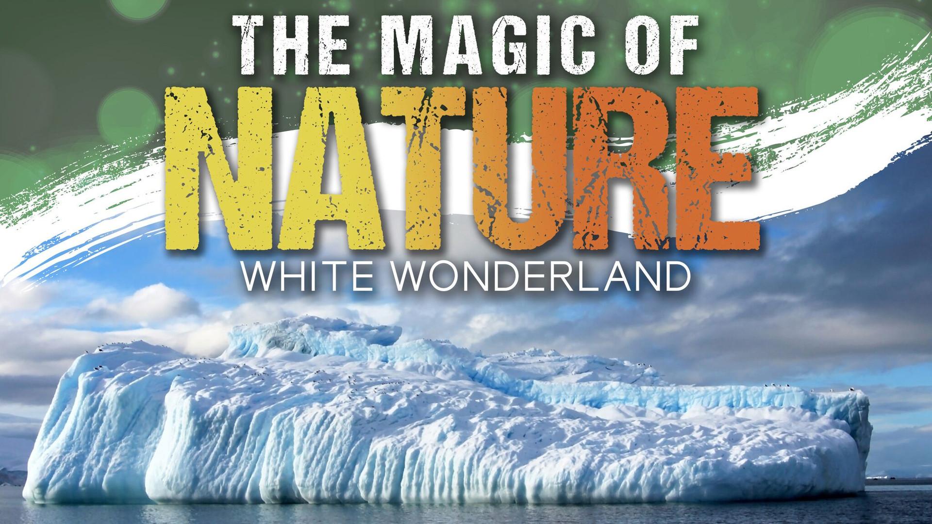 White_Wonderland.jpg