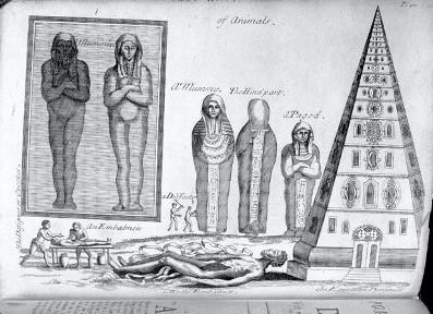 Mummies in Medicine Museums