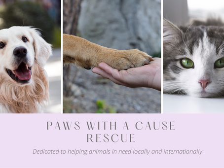 Paws Rescue Update