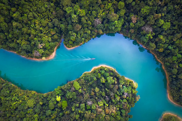 Nature from Above
