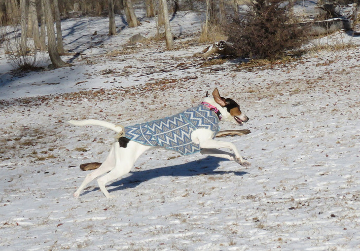 Meet the Maker: Connie of Canine Cardigans