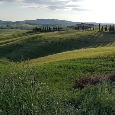 Тосканские холмы. Поездки на винодельни