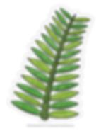 PalmFrondColoringPage.png