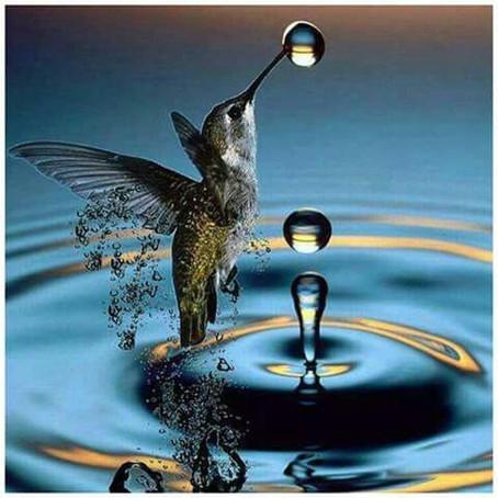 La légende du colibri (conte amérindien)