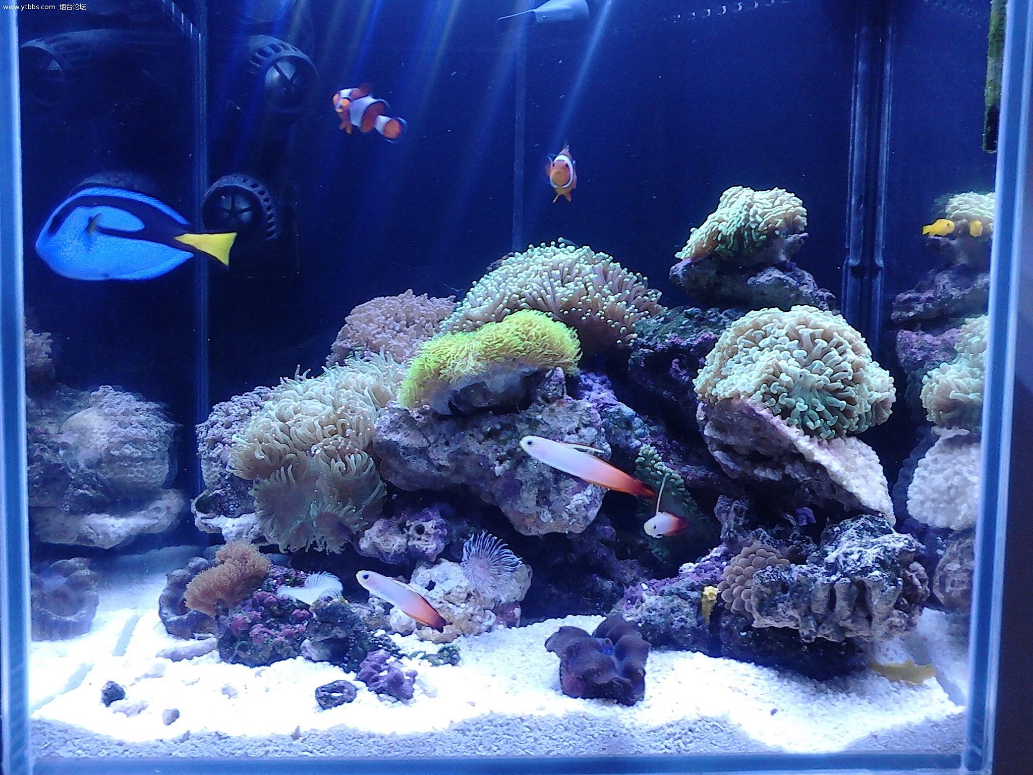 Freshwater fish store near me - 114645oab8n22noe98la5z 114645oab8n22noe98la5z