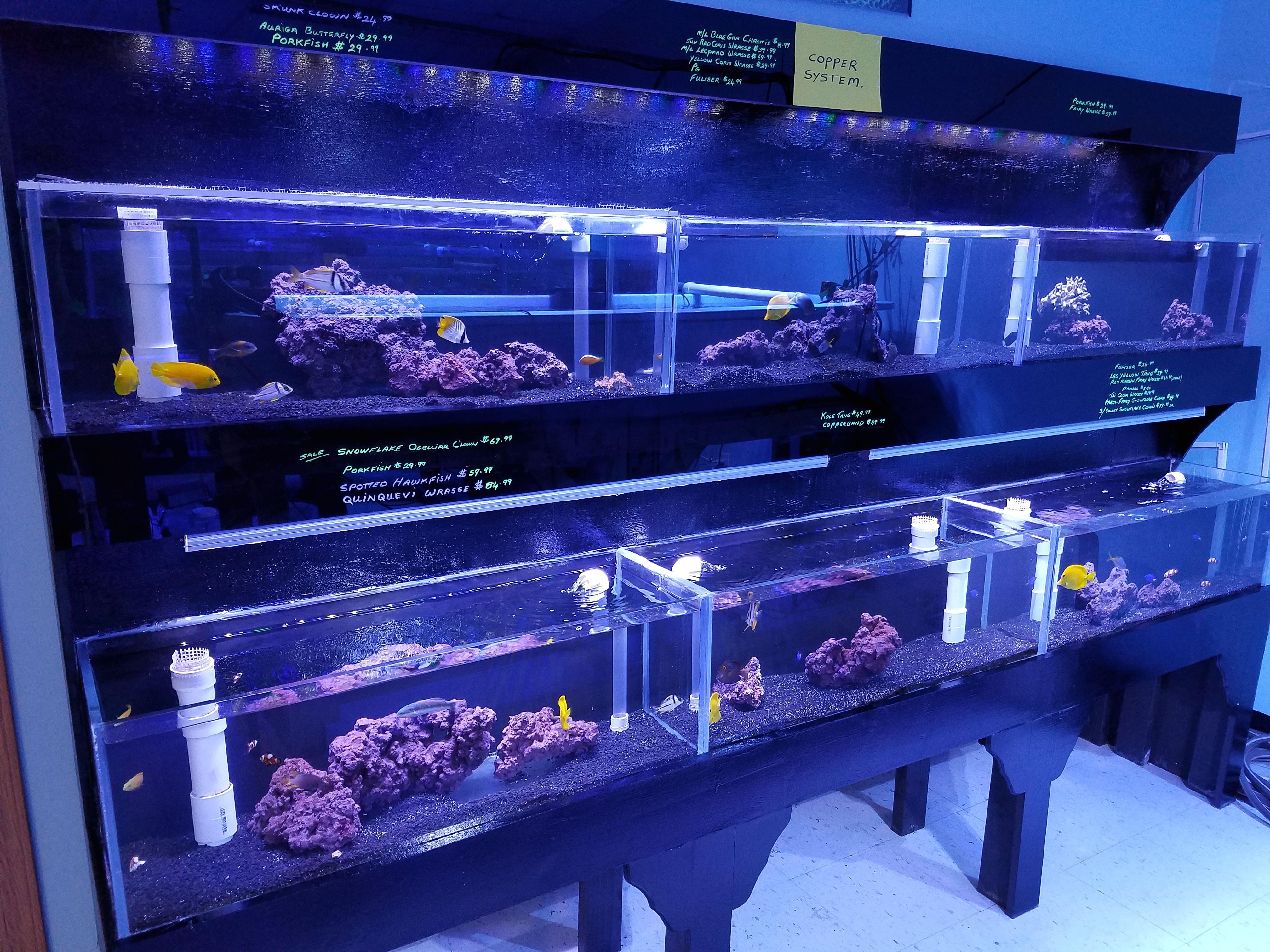Freshwater fish store near me - 20160916_181043
