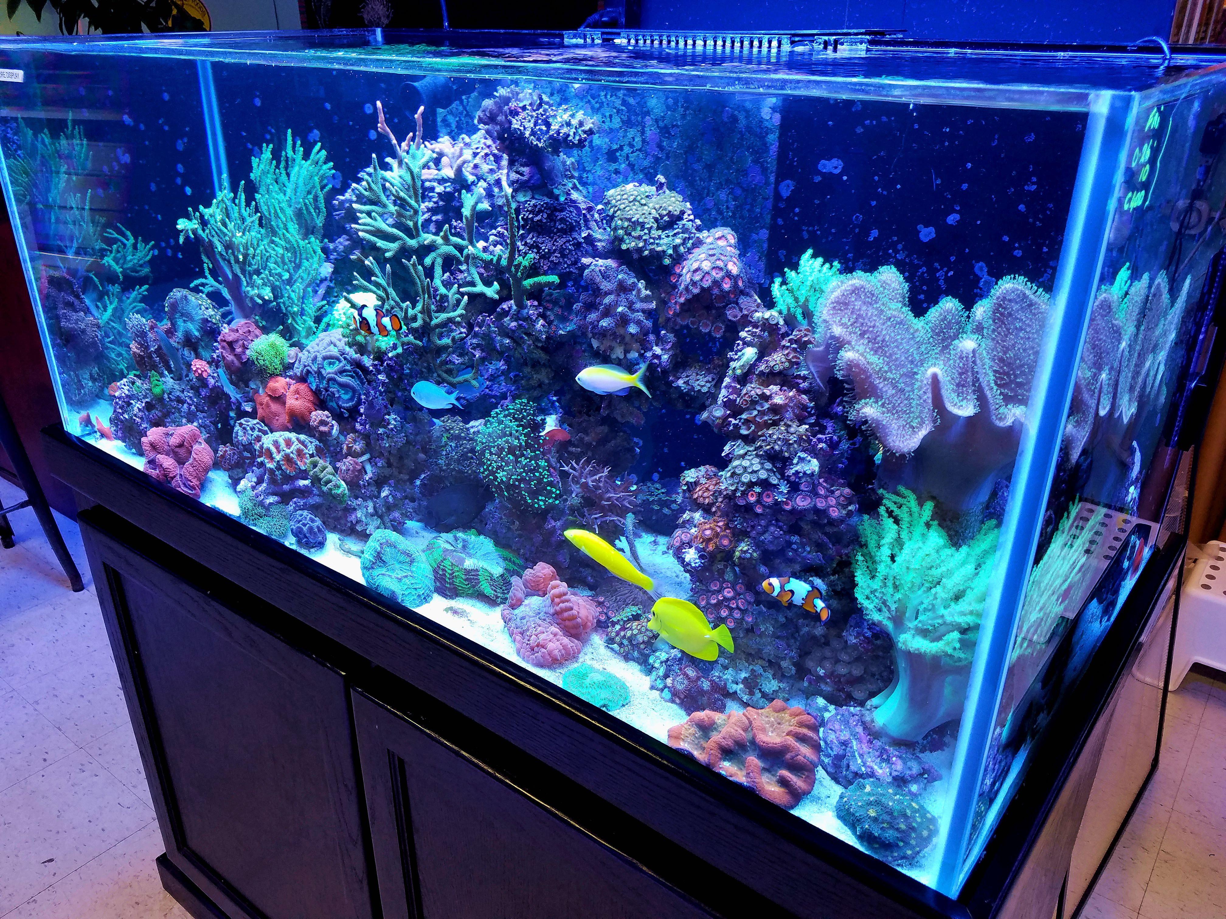 Freshwater fish store near me - 20160916_181356