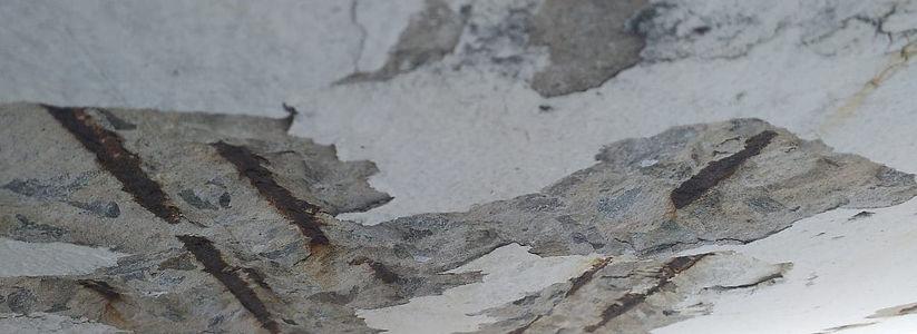 Ausência de recobrimento do concreto.