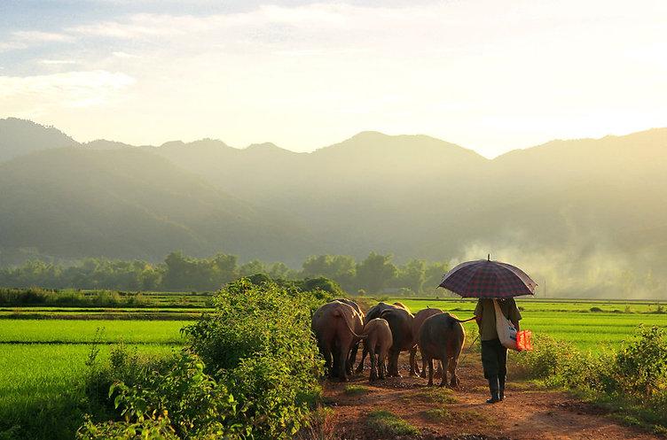Vietnam Dien-Bien-Phu_Easia.JPG