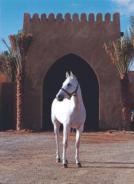 PAGE02 UAE.jpg