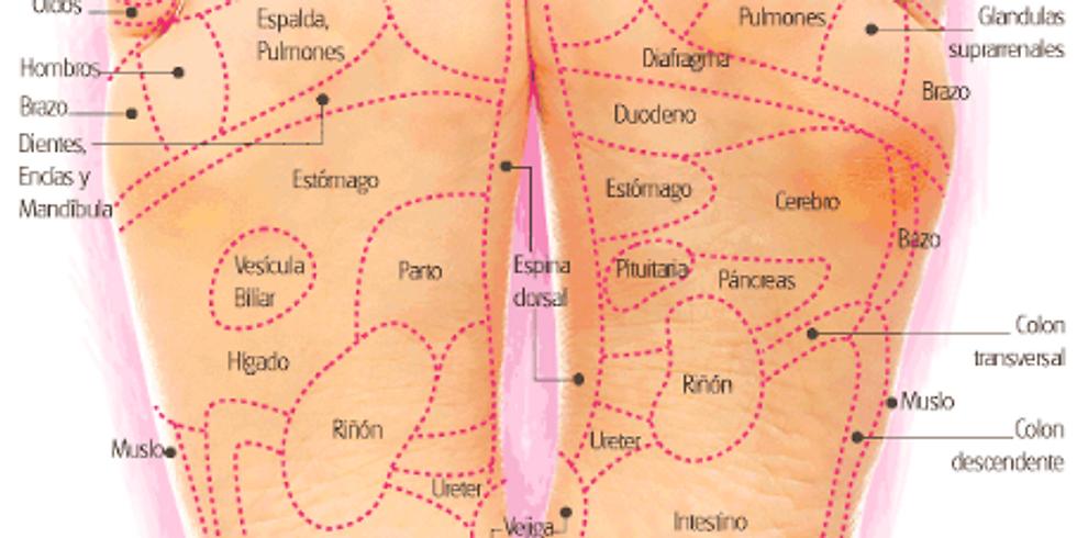 FORMACIÓ INTENSIVA REFLEXOLOGIA PODAL