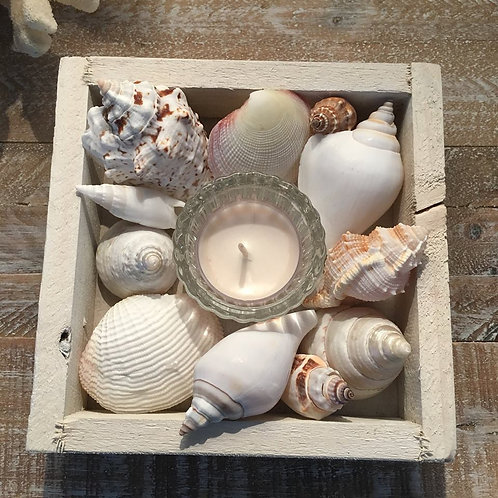 SHELL TEALIGHT BOXES