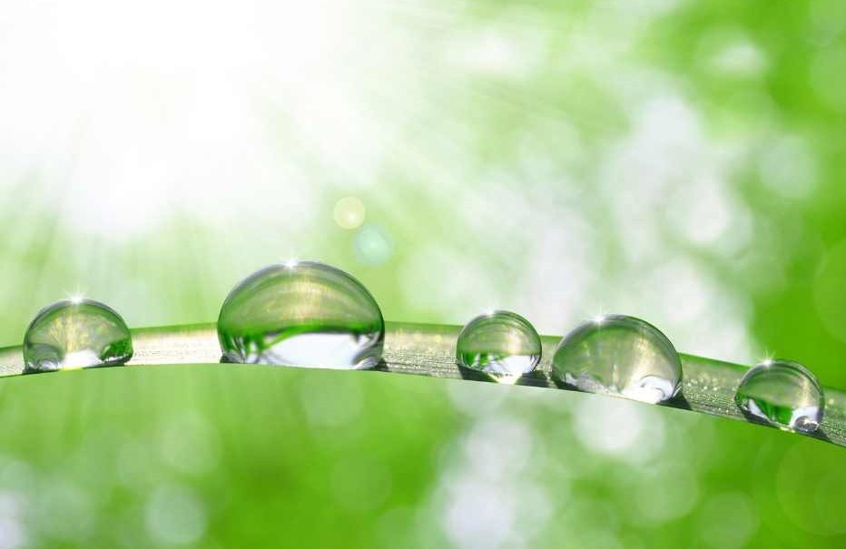 Mindfulness practices to stay calm, dewdrop meditation