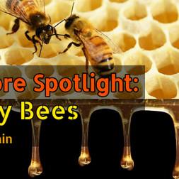 Folklore Spotlight: Honey Bees