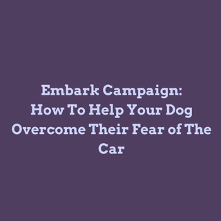 Wagoween Trainer Tip - Car Trouble: How to Help Your Dog Overcome Their Fear of the Car