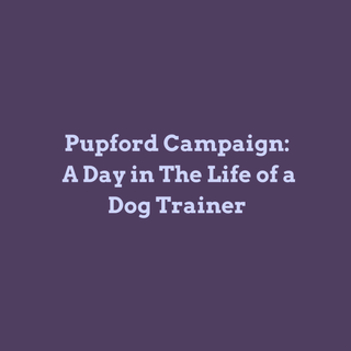 A Day in The Life of Dog Trainer