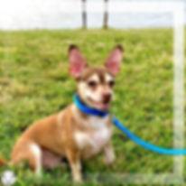 Freddie dogp photo