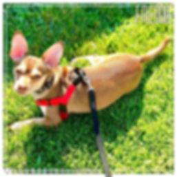 Freddie leas walk