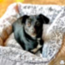 Pet Sitting South Jersey