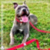 Jade dog photo