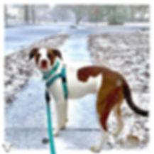 Dog Walking South Jersey
