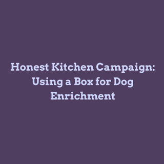 Using Boxes for Dog Enrichment