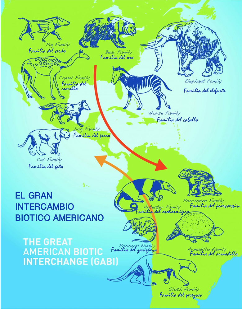 Great American Biotic Intechange (GABI).