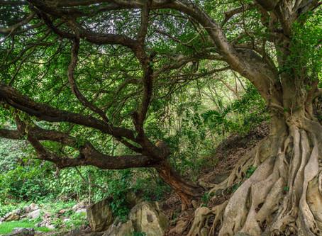 Un Día de la Tierra en cuarentena; lecciones que aprender
