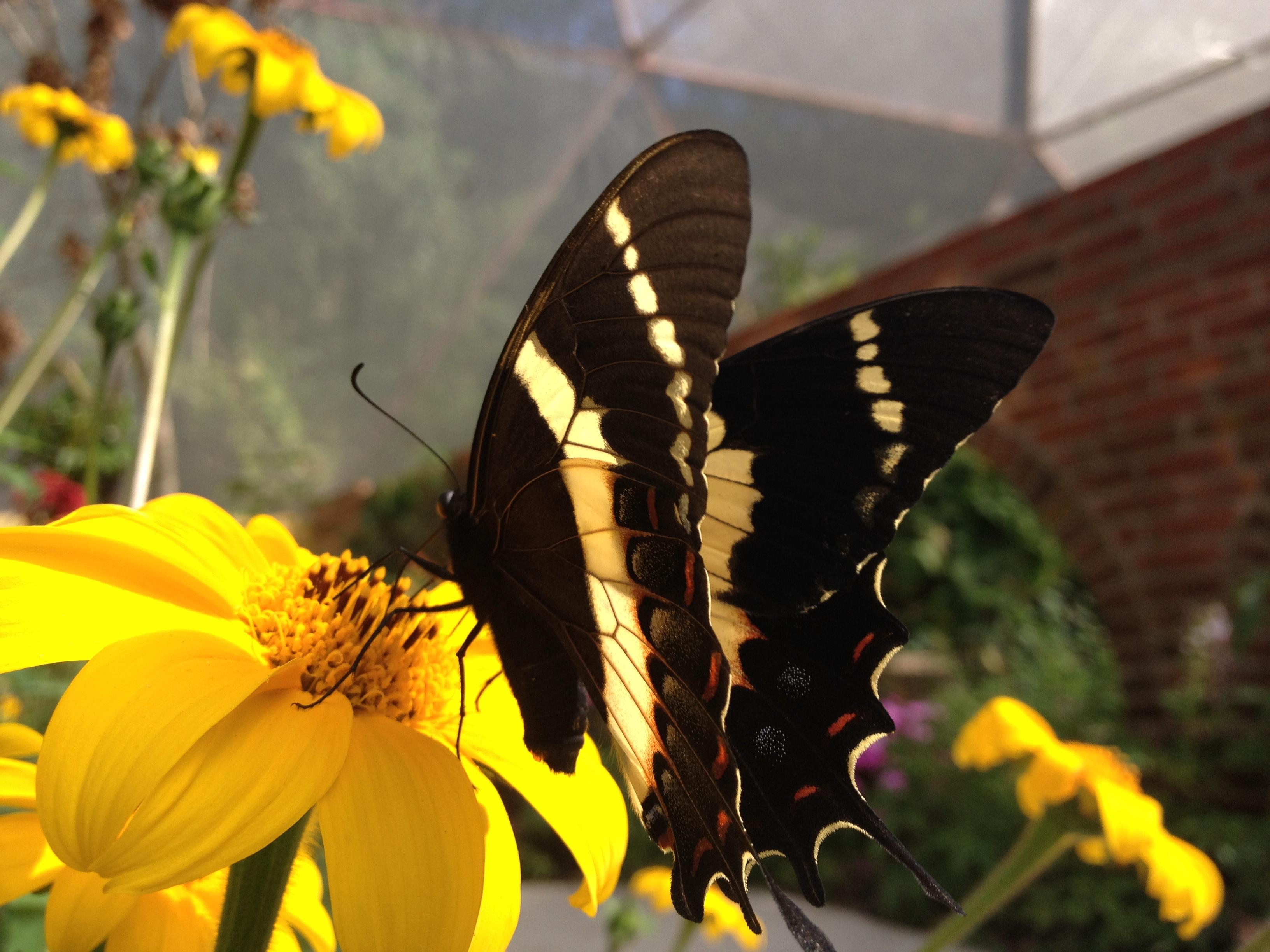 Mariposa alimentándose