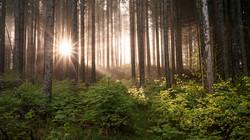 forest light!