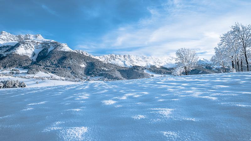 neige et arbres-3