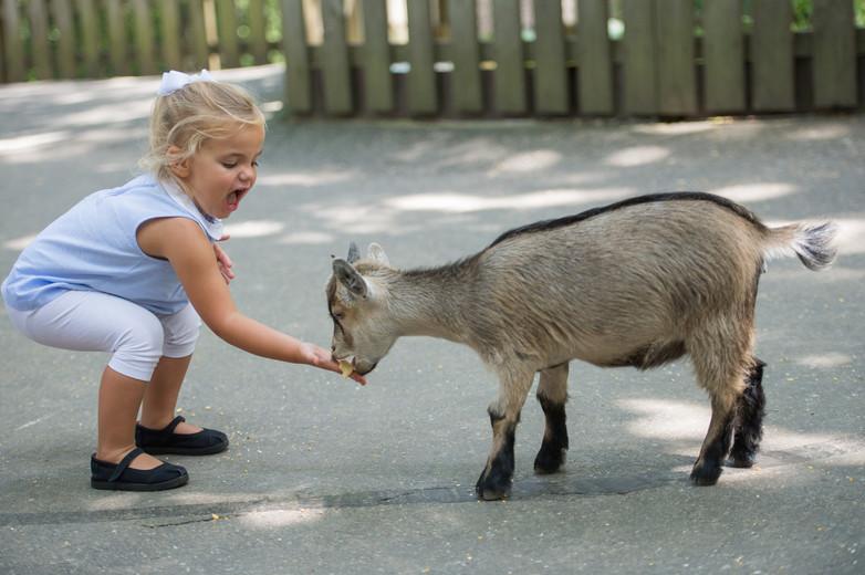 Feeding Goats at the Deer Park Zoo.jpg