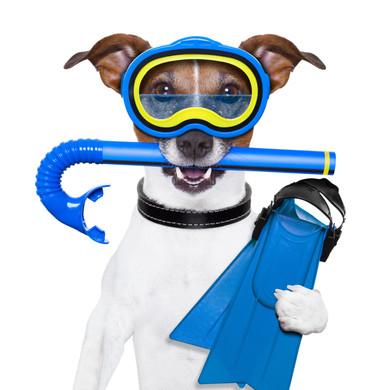 scuba dog.jpg