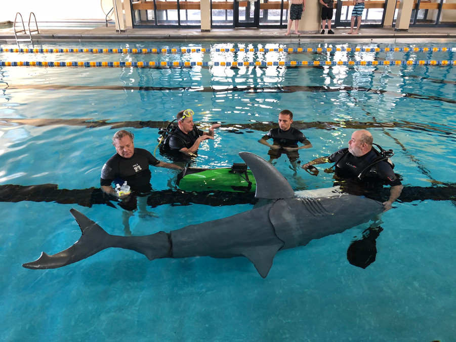 Shark Training with Scuba.jpg