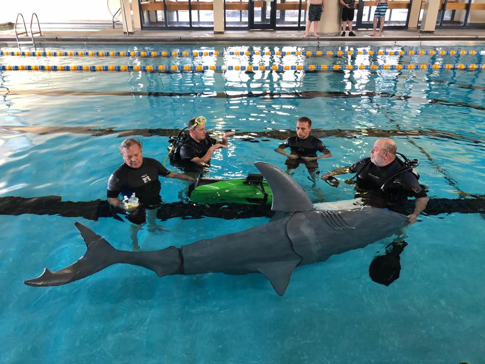 Shark Training with Scuba.jpg