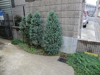 レンガ花壇、植栽