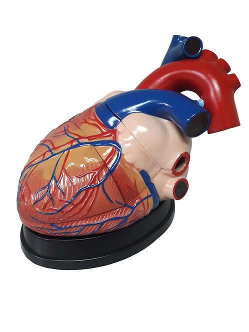 Corazón Modelo Jumbo