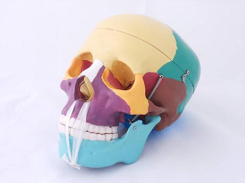 Cráneo Humano, Huesos Pintados