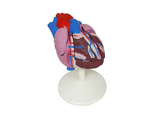 Corazón Mediano