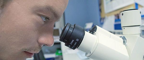 ver por microscopio, vista, visión, microscopio, muestra, laboratorio, microorganismo, bacteria, ciencia, educación, tecnología.